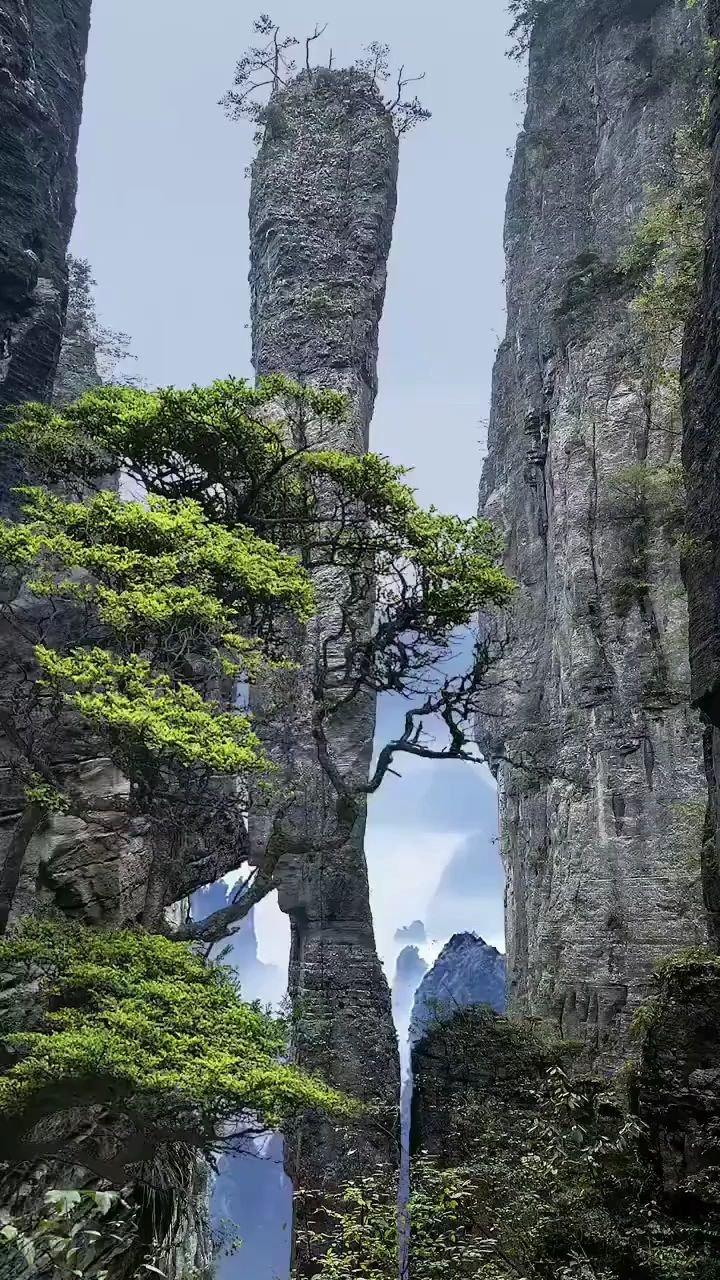 """恩施大峡谷""""一炷香""""高达150米,直径仅4米,下窄上宽。屹立千年不倒!"""