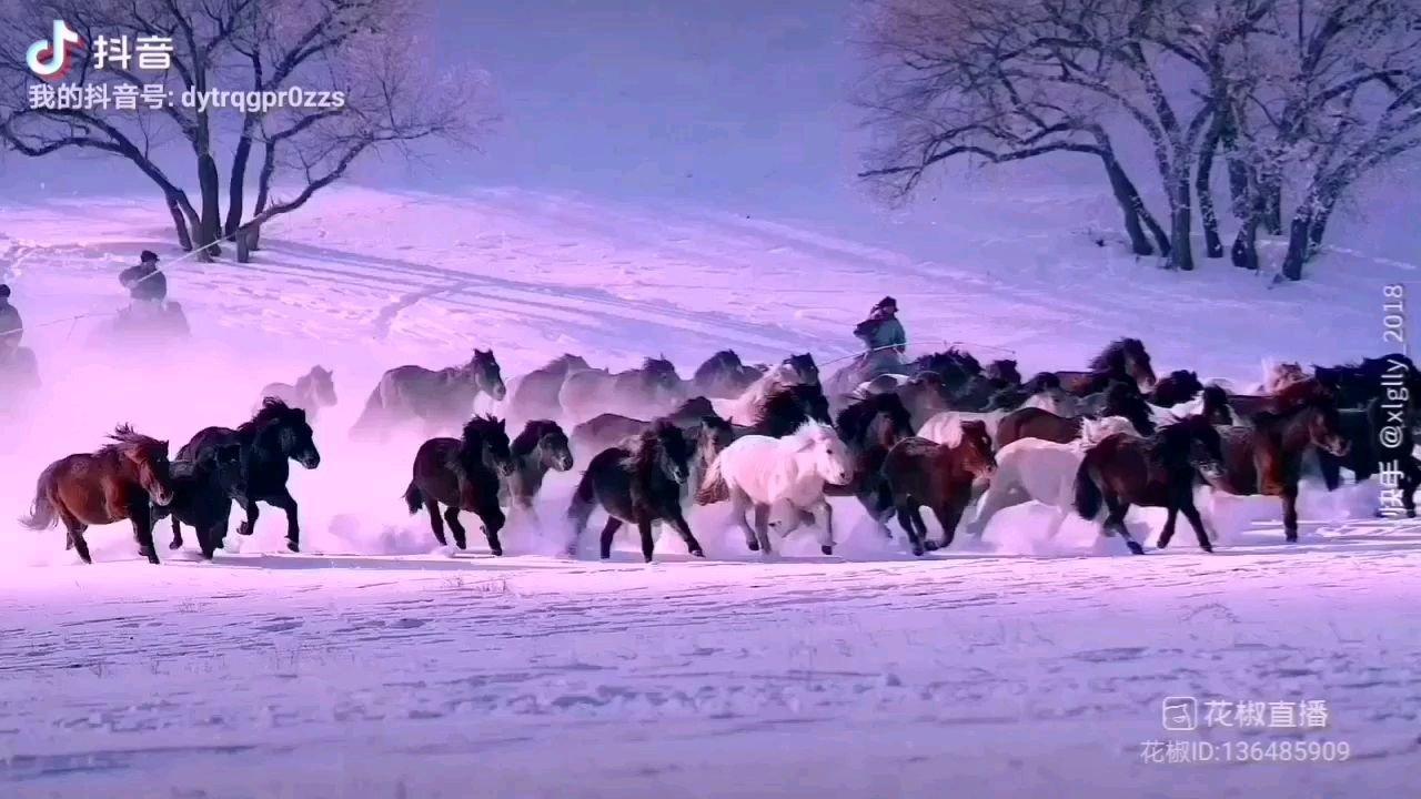 《塞北情》  我在塞北放牧 驱赶着奔腾的马群 风雪中我们傲然前行 到处都留下了我们潇洒的身影……