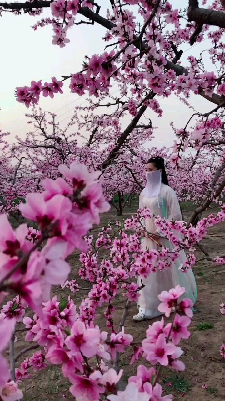 @花椒热点 #春暖中国 #最美古风 #原创达人