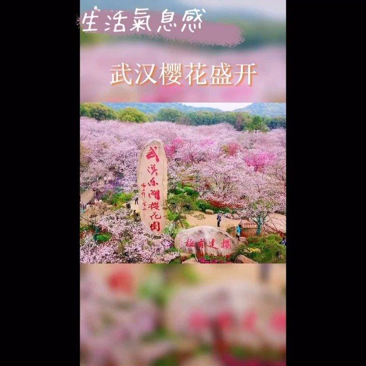 #3月你好 绵绵带你一起赏武汉樱花园#花椒星闻 @花椒热点  #又嗨又野在玩乐 来武汉半个月,在这座陌生的城市里,有些无助,没有安全感,没有温度…但是今天去赏樱花,确实有让我发现这座城市的美,虽然一次赏樱花不足以体现深厚的文化底蕴美,但确实有些喜欢上武汉~每座城市都有它存在的魅力?#新人报道请多关照  认知世界,开阔眼界,结交新友,不断更新自我?#花椒好舞蹈
