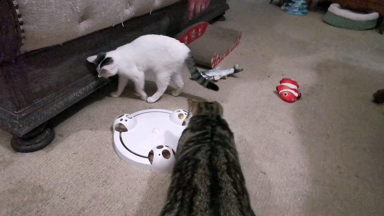 两只猫也没有抓住一只耗子