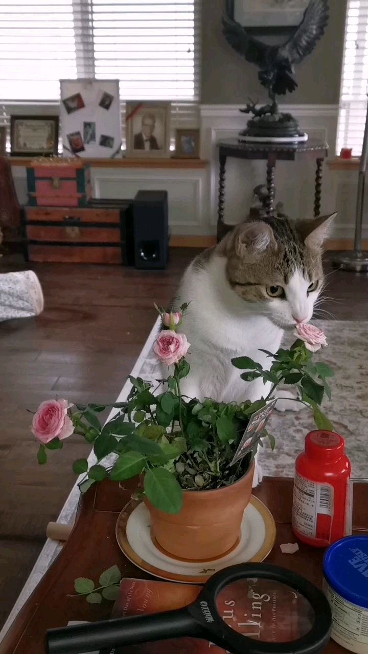 你知道猫咪也是采花大盗吗?