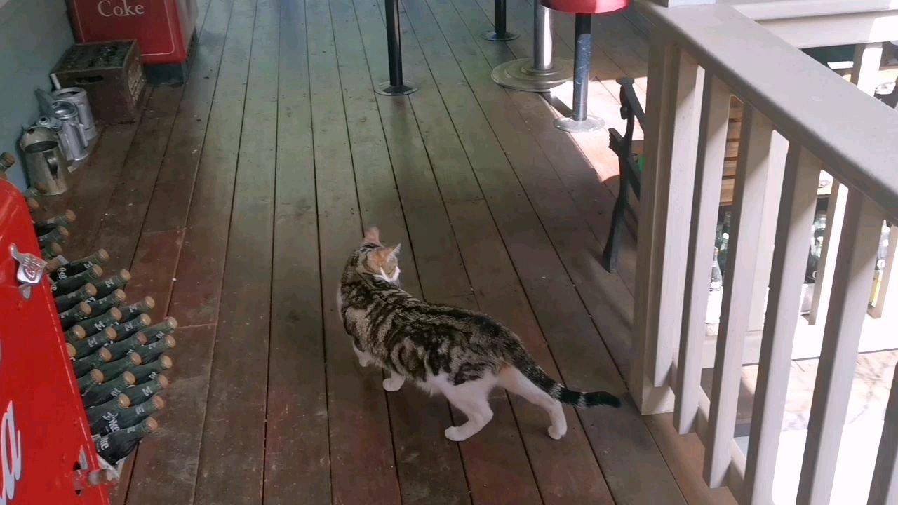 溜猫不用绳子~~~
