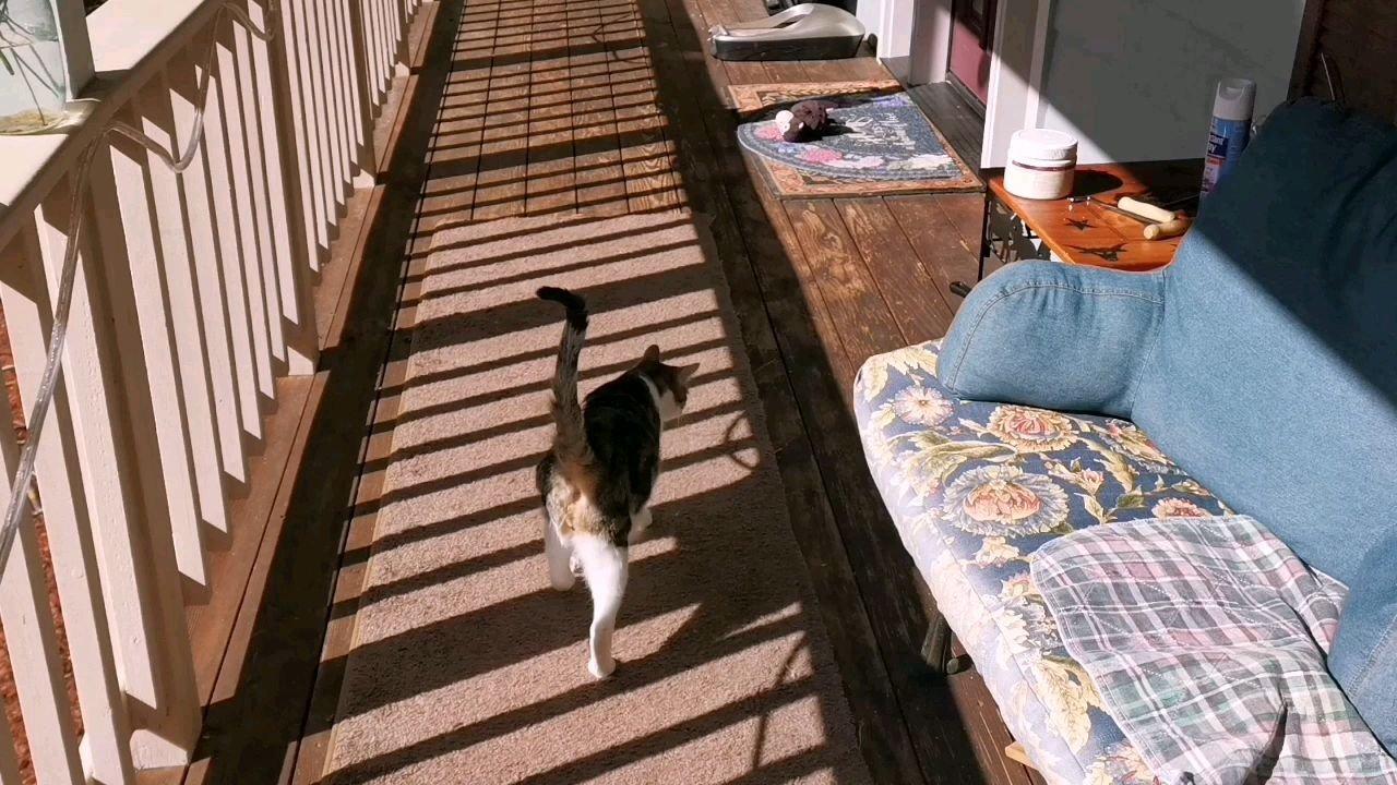 今天花豹绕着房子?遛了一圈~ 很快就可以去花园里遛弯啦~ 乖乖的大猫~~~