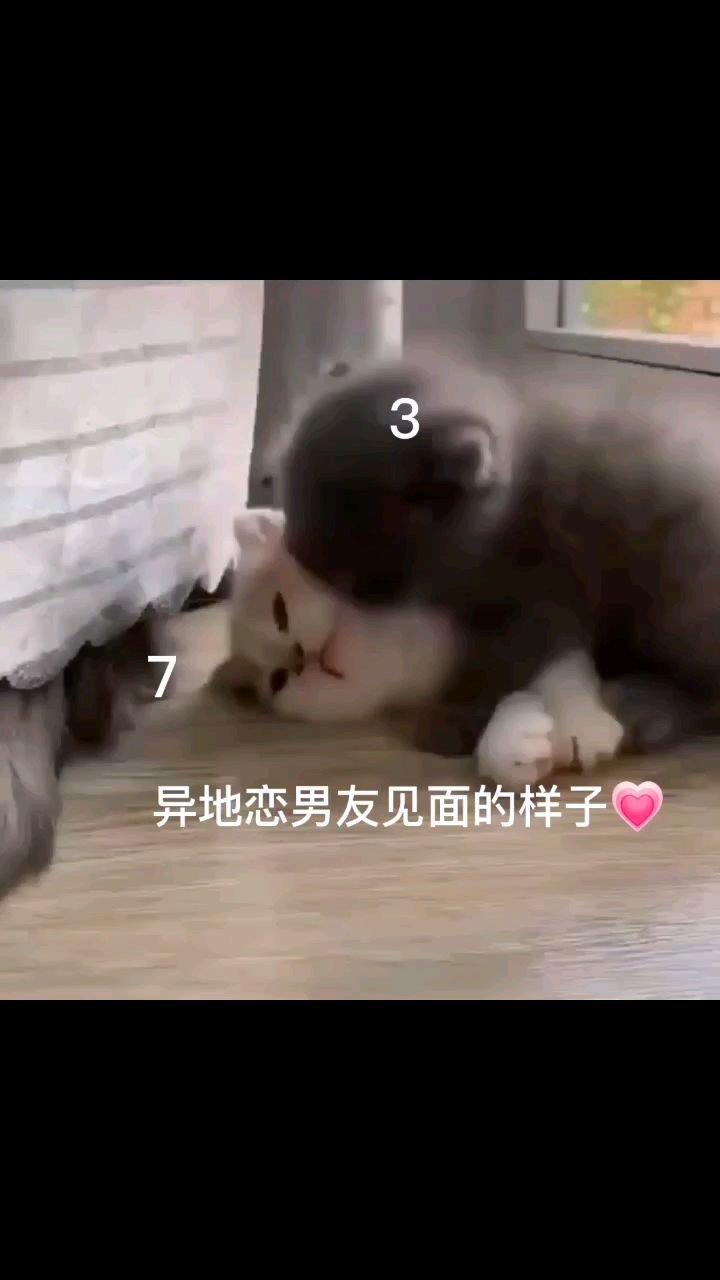 @三七呀???