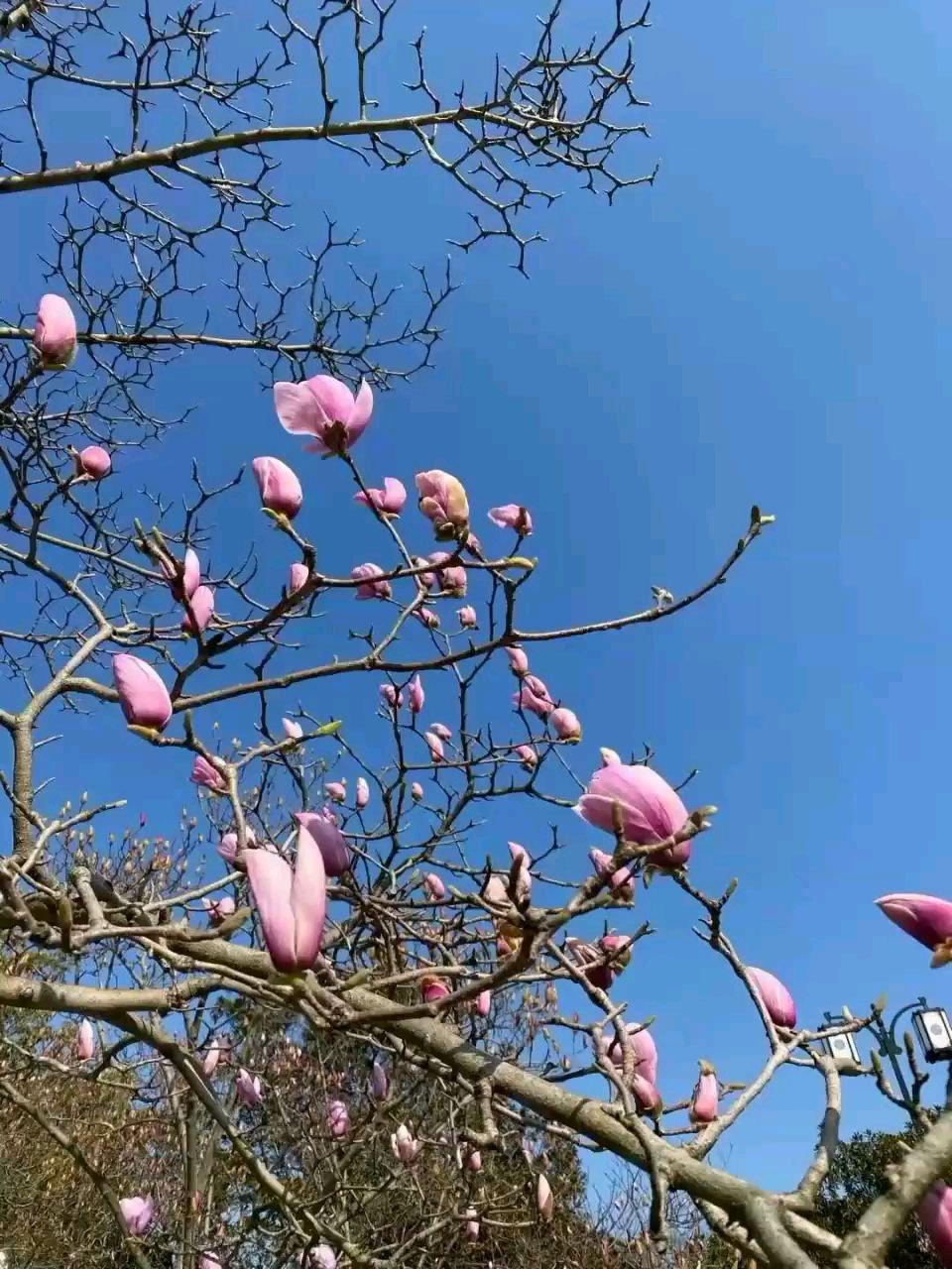 世间万物,有舍才有得 2月也许有失望,但3月更值得期待 命运不会亏待你的努力 闯过去,前方就是海阔天空!