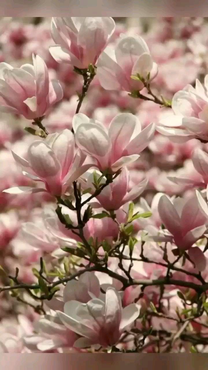 二月,再见;三月,你好!流年穿梭而过,岁月不再蹉跎。光阴不能虚度,春光不能白流。二月未竟事,三月再连环。