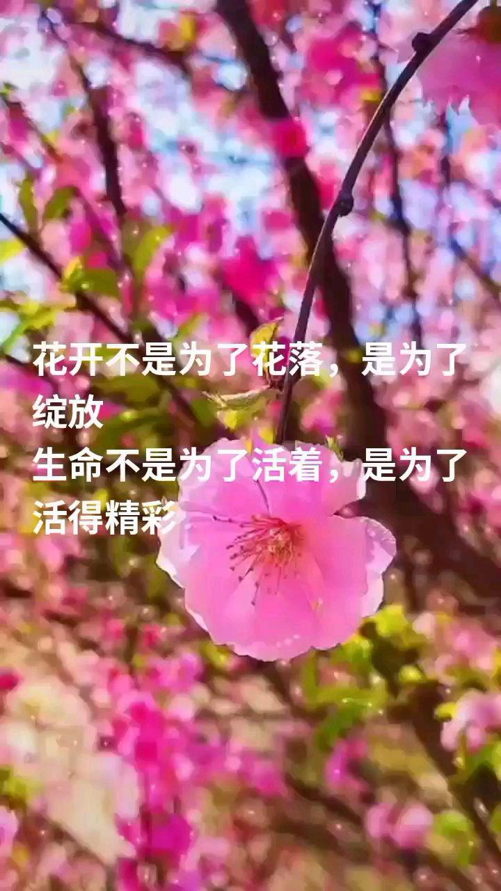 花开不是为了花落,是为了绽放 生命不是为了活着,是为了活得精彩 打磨自己的过程很疼,但最终能塑造一个更好的自己