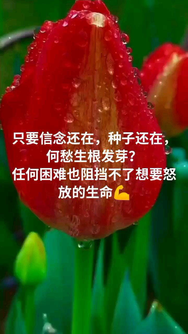 只要信念还在,种子还在,何愁生根发芽? 任何困难也阻挡不了想要怒放的生命?