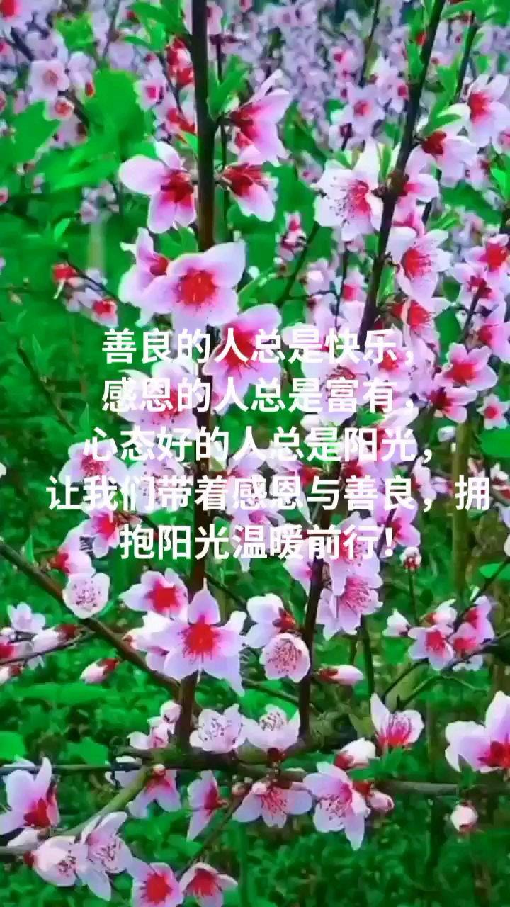 善良的人总是快乐, 感恩的人总是富有, 心态好的人总是阳光, 让我们带着感恩与善良,拥抱阳光温暖前行!