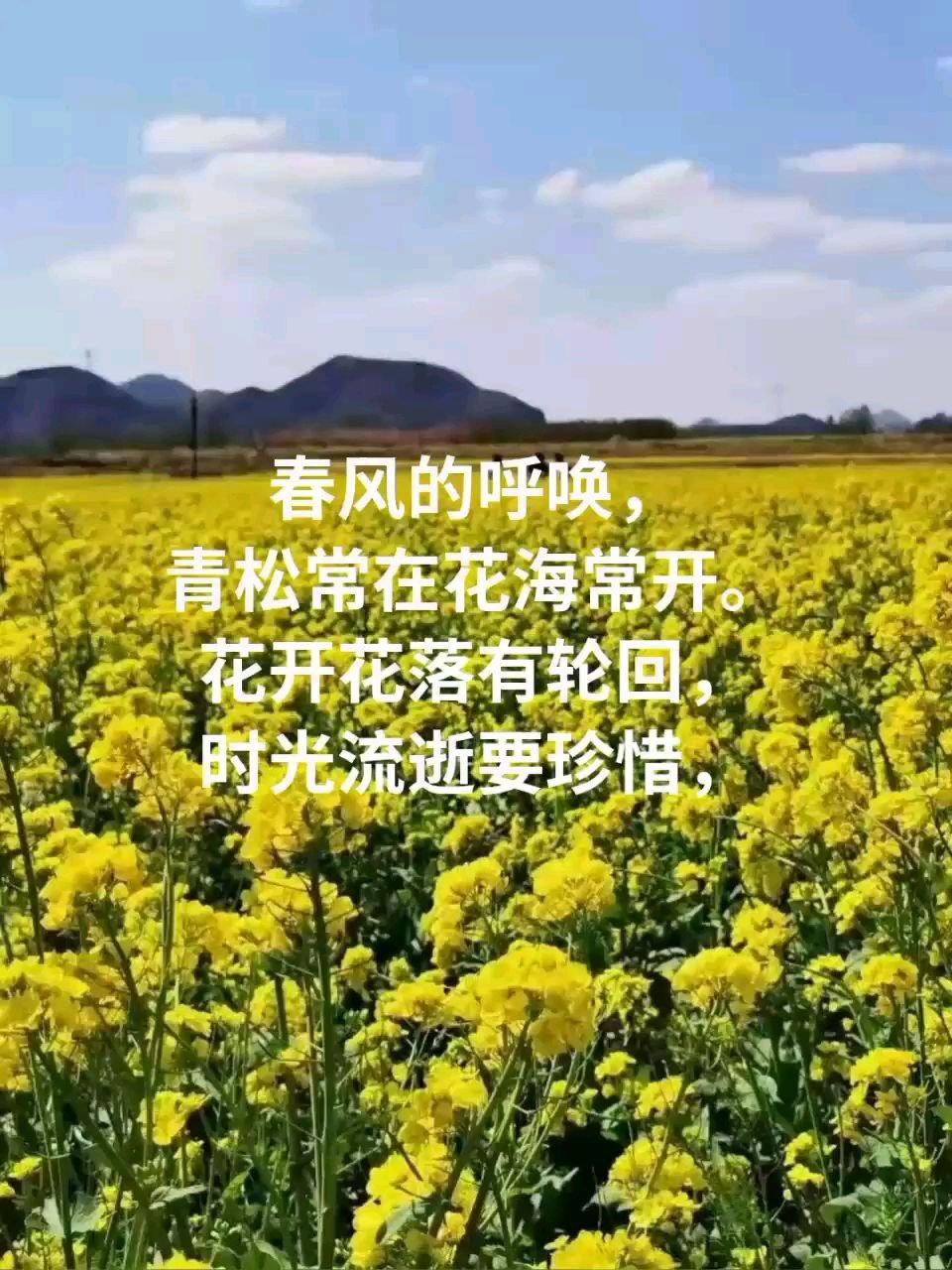 春风【嘀~】呼唤, 青松常在花海常开。 花开花落有轮回, 时光流逝要珍惜,