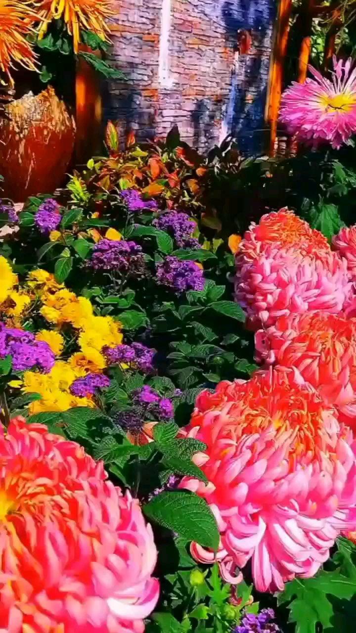随遇而安无不可,人间到处有花香。