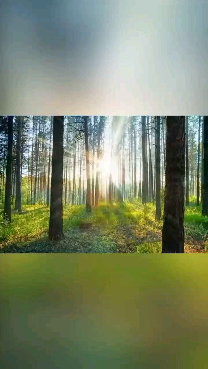 生命的美,在于心存希望,砥砺前行,总会收获温暖与感动,走过寒冬,总会迎来春暖花开,每一天,去做更好的自己!