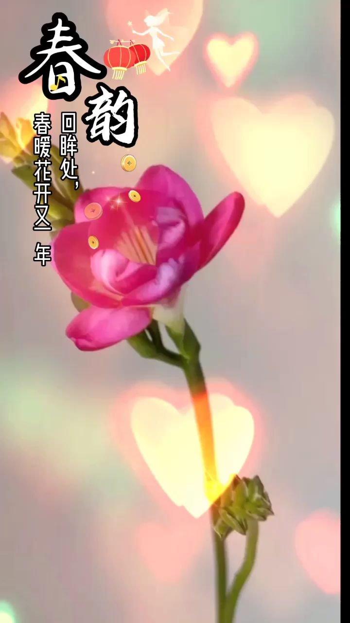 #为新春起舞 今日无事,唯有开心??