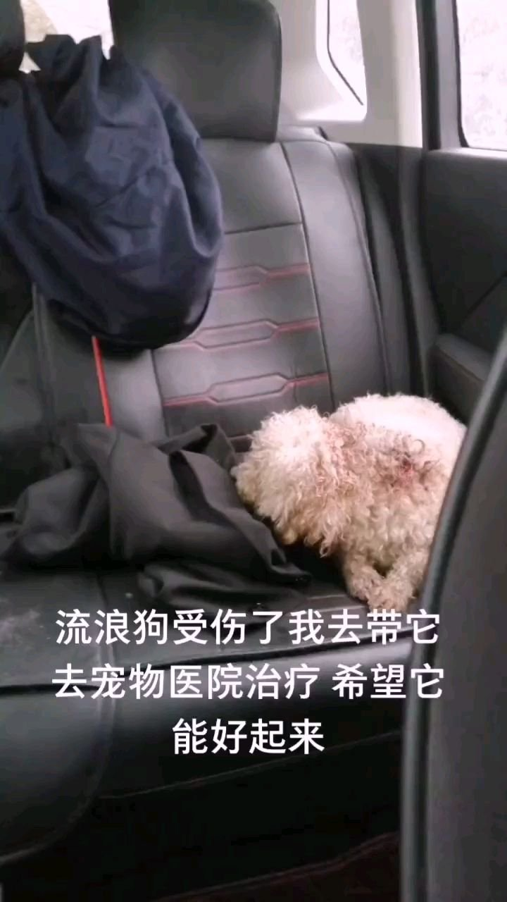 流浪狗受伤了我去带它去宠物医院治疗 希望它能好起来#保护流浪动物 #流浪狗
