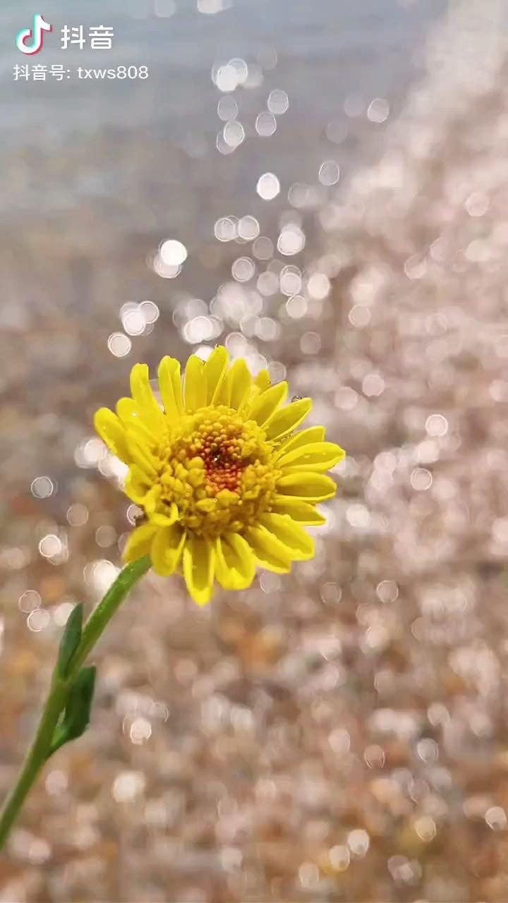 不好过的日子里,要学会每天给自己找一个开心的理由,哪怕只是阳光很暖☀,电量很满?。