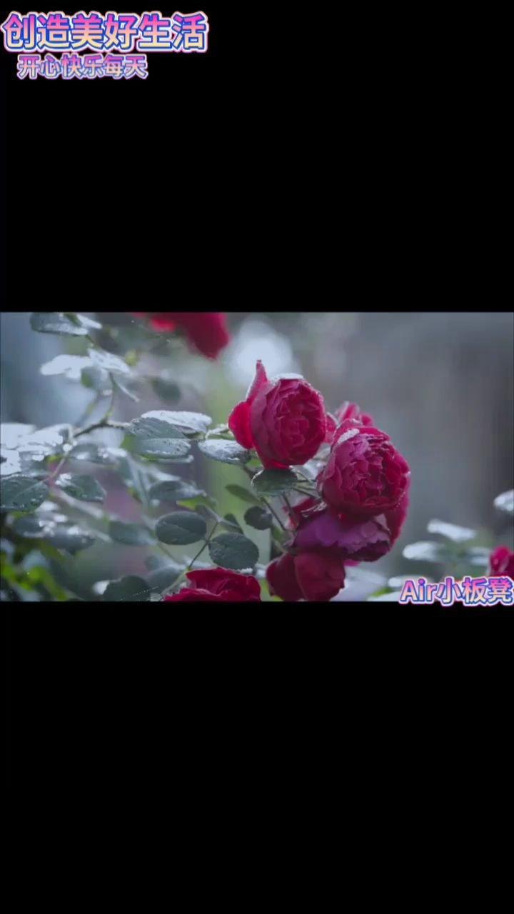 #六月你好 #花椒好声音 #颜即是正义 #一花一茶03