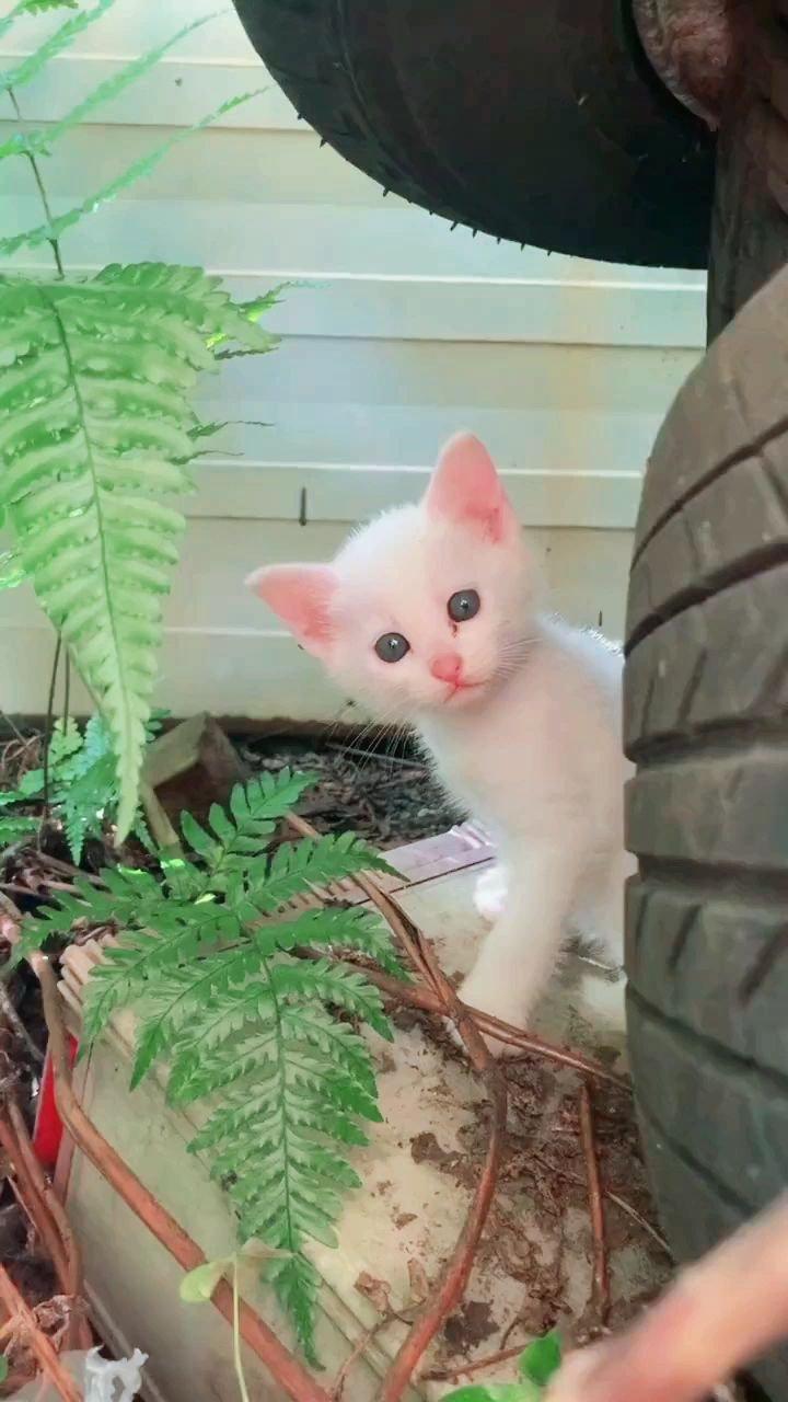 #六月你好 ?️?️#颜即是正义 #带上花椒去旅行 ?️?️超可爱、超萌咯,都想走过去,抱一抱你,喵喵喵?️?️?️