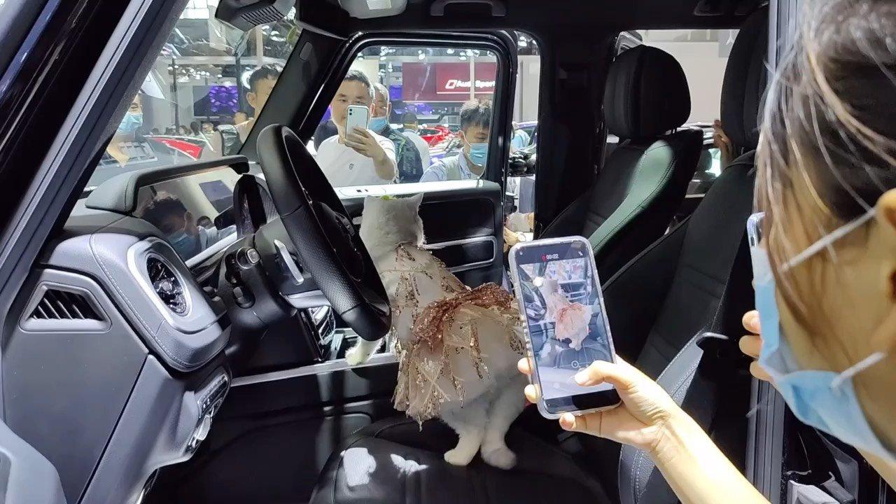 月入上万的网红车模猫!