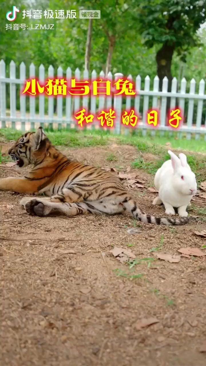 """大白兔对小老虎说:""""起来你 谁让你躺这了 信不信我咬你尾巴""""??"""