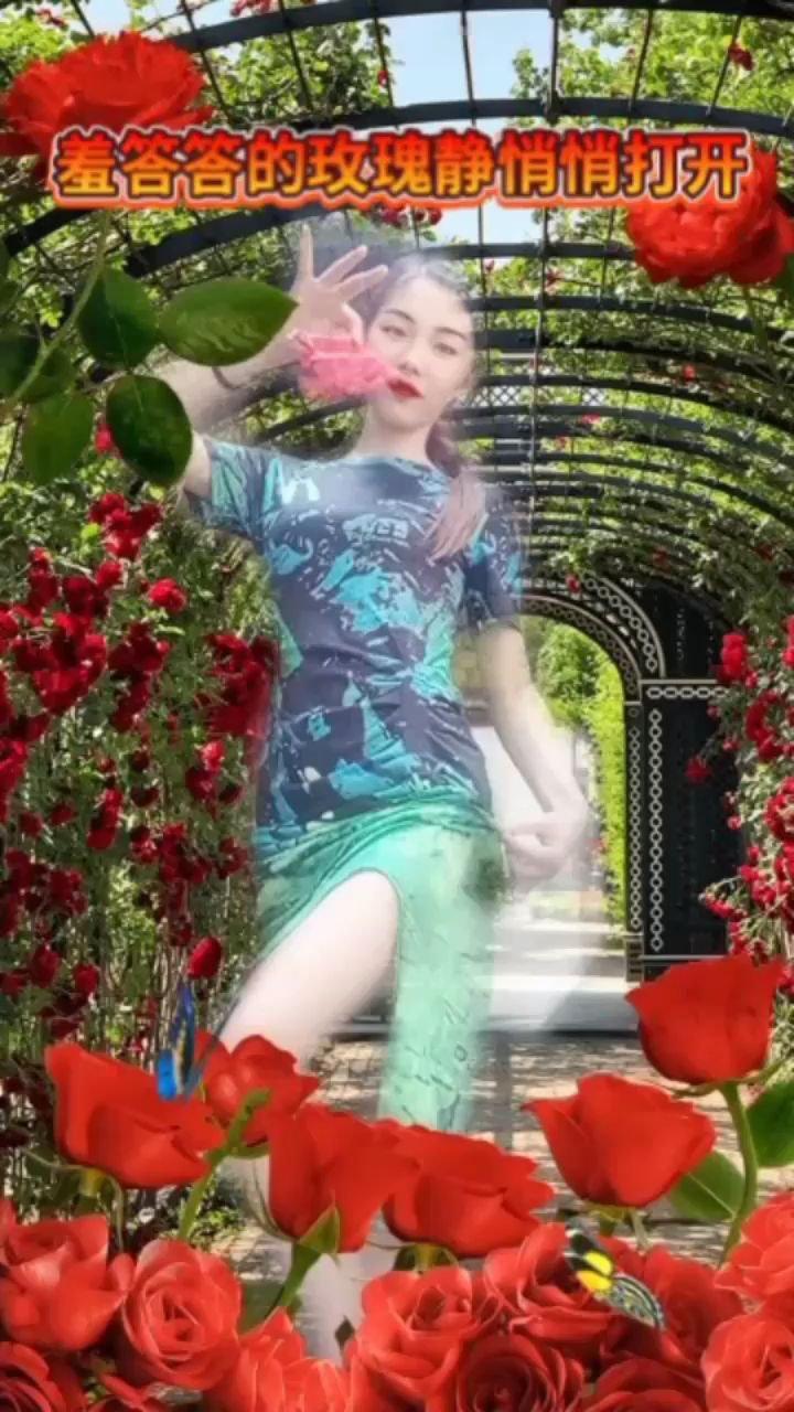 羞答答的玫瑰靜悄悄的開好美啊