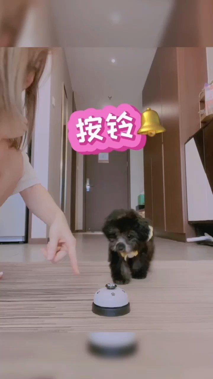 想不想要一个会训狗的女朋友? #七夕全能女友