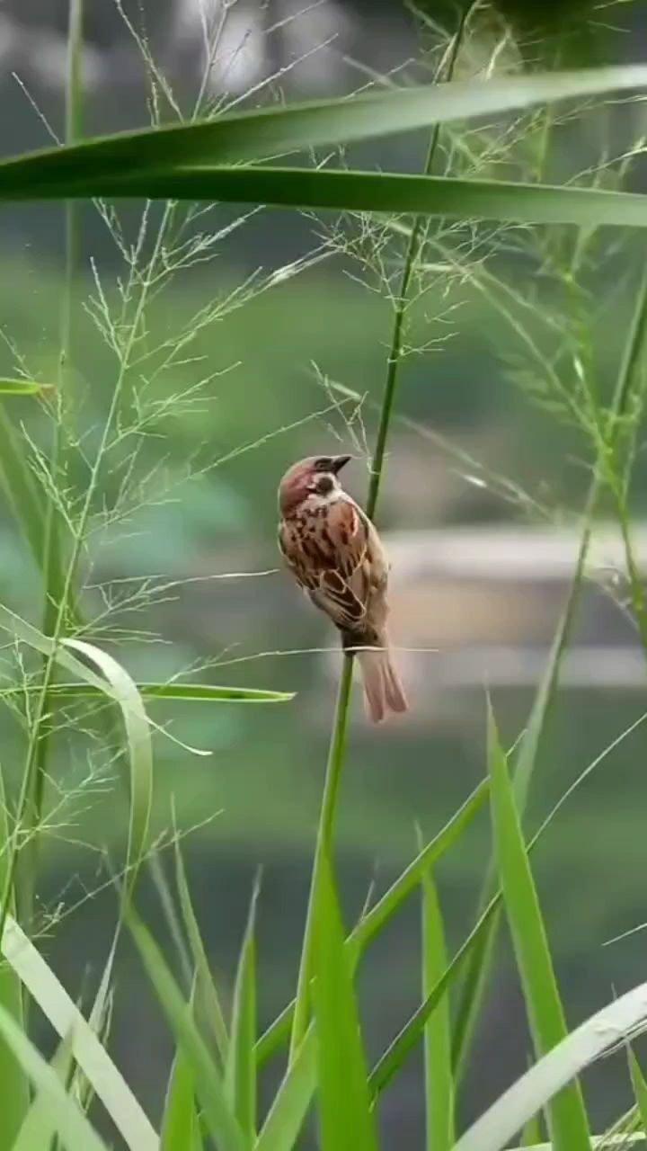自由的小鸟快乐的飞翔!