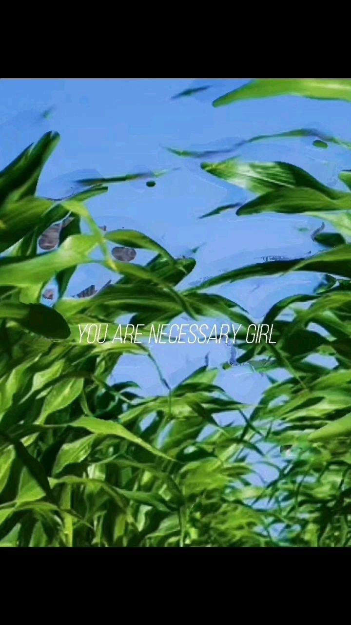 #八月你好 #花椒趣味运动会 早安!学会在逆境中生长!