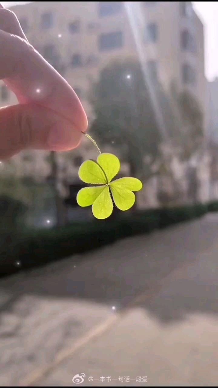 幸运的四叶草,努力的一切都会很幸运?