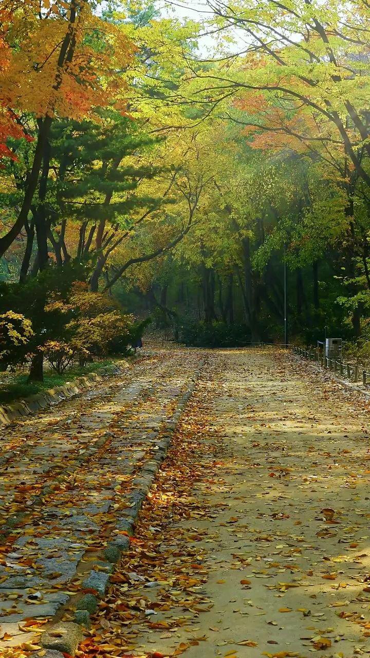 """秋是慢入的,但冷却是突然的,晴不知夏去,一雨【嘀~】秋深!有些情绪不言而喻…… """"最美风景""""秋天#带上花椒去旅行 #八月你好 #花椒热点"""