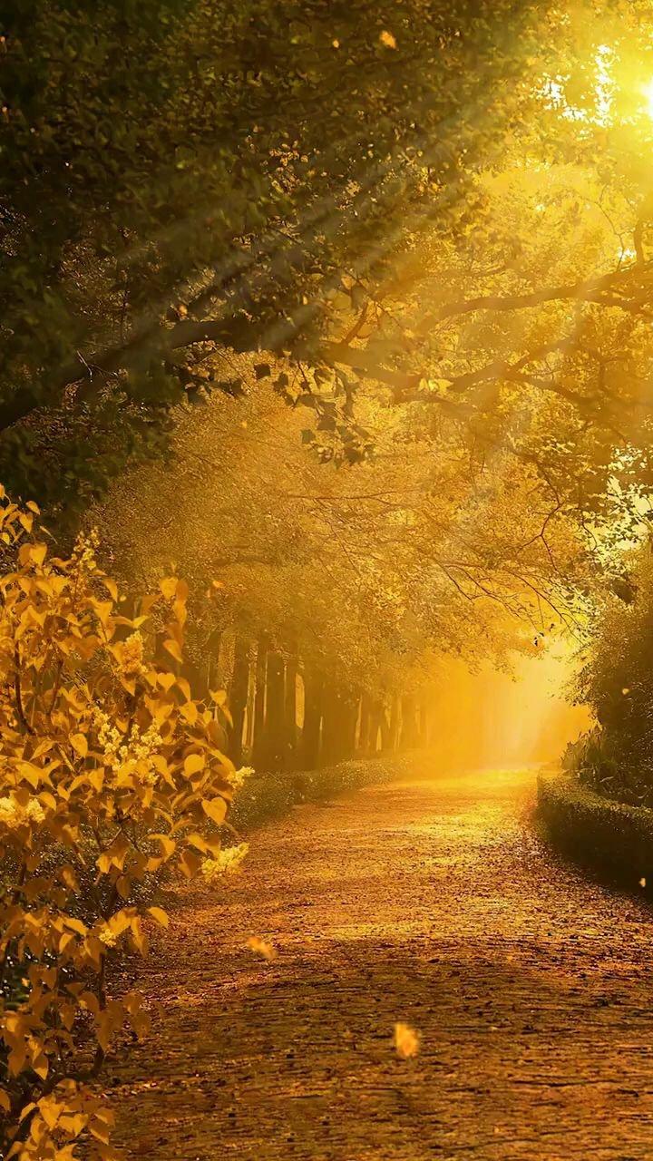 秋意浓,叶落知秋,治愈、风景、秋天#带上花椒去旅行 #八月你好 #花椒热点