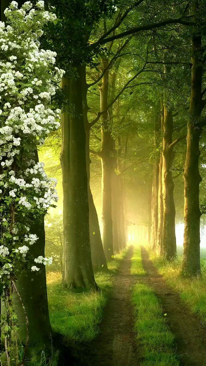 时光太瘦,指缝太宽,一个转身夏天就成了故事,一次回眸秋天便成了风景,四季轮回,愿夏天的遗憾与秋色平分。  #带上花椒去旅行 #花椒热点