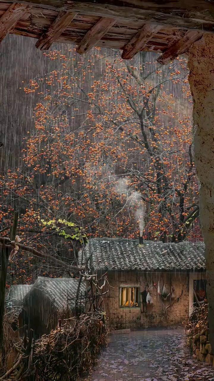 深山里一户斑驳的老屋子旁,一颗柿子树上结满了柿子,无人采摘,户主已经90高龄了%怀旧 %农村 %乡愁#带上花椒去旅行 #花椒热点