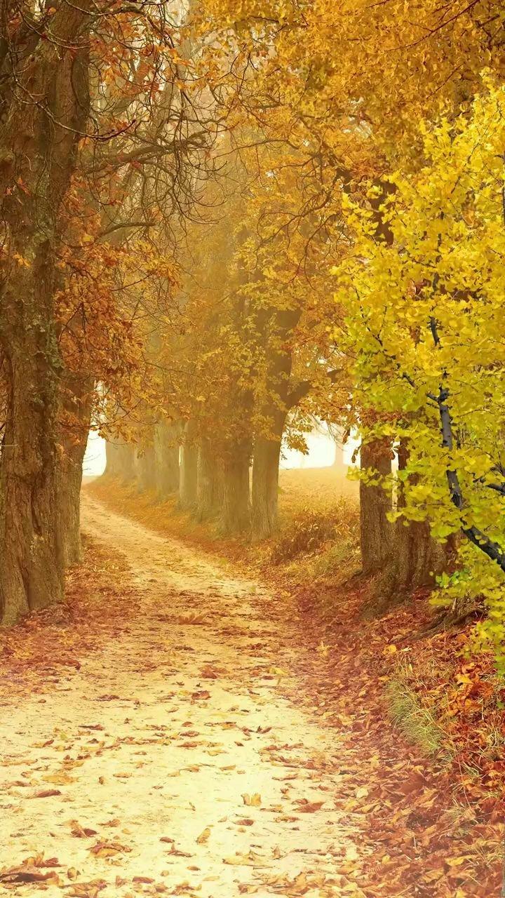 """""""来者要惜,去者要放,人生是一场旅行。不是所有人,都会去同一个地方""""%风景 %治愈、秋天"""