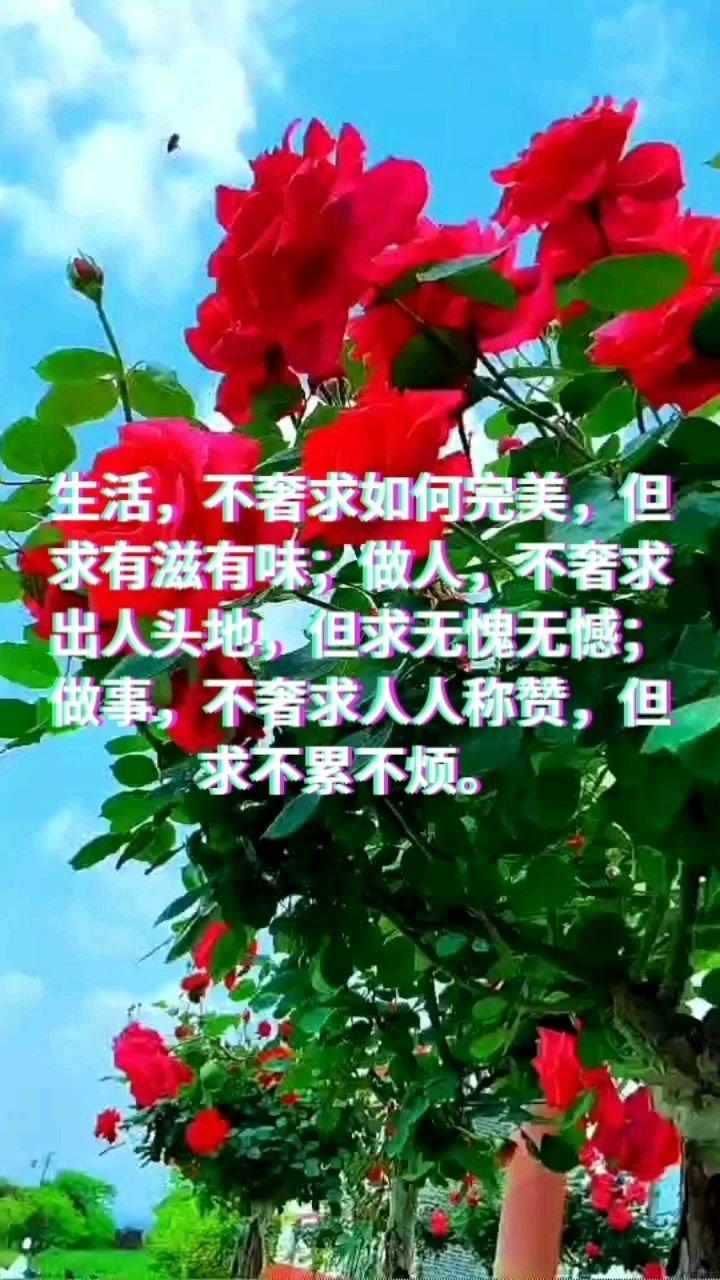 生活,不奢求如何完美,但求有滋有味;做人,不奢求出人头地,但求无愧无憾;做事,不奢求人人称赞,但求不累不烦。