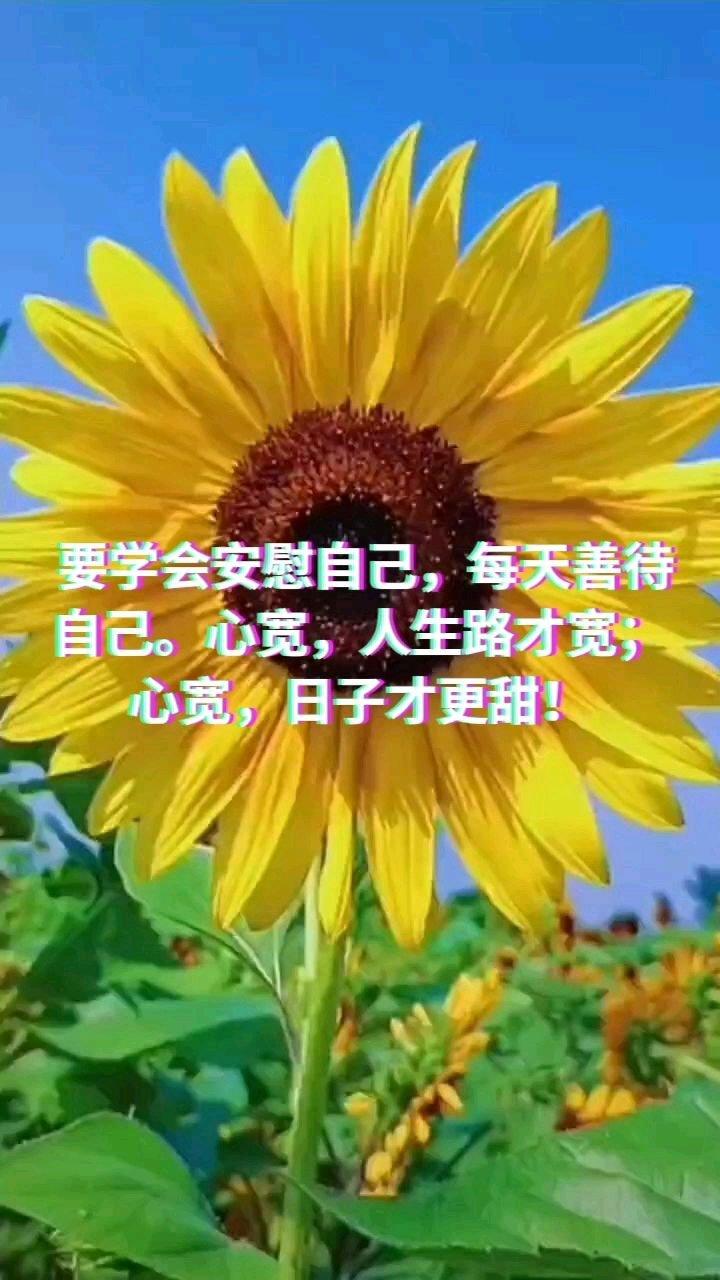 要学会安慰自己,每天善待自己。心宽,人生路才宽;心宽,日子才更甜!