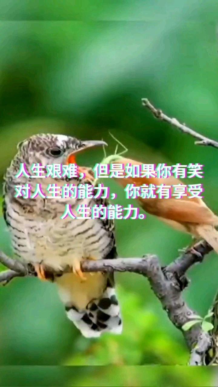 人生艰难,但是如果你有笑对人生的能力,你就有享受人生的能力。 