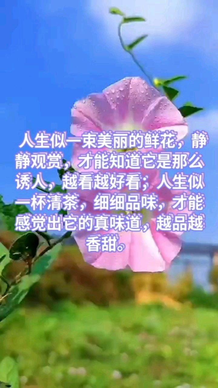 人生似一束美丽的鲜花,静静观赏,才能知道它是那么诱人,越看越好看;人生似一杯清茶,细细品味,才能感觉出它的真味道,越品越香甜。