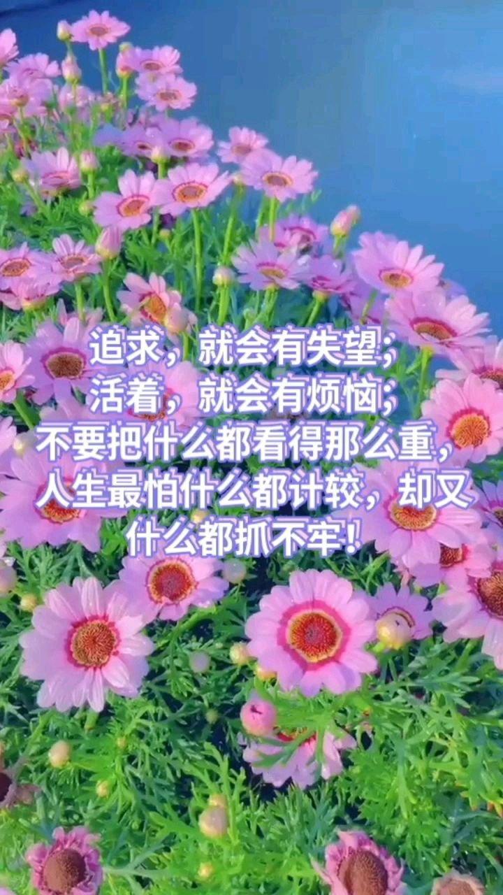 追求,就会有失望; 活着,就会有烦恼; 不要把什么都看得那么重,人生最怕什么都计较,却又什么都抓不牢!