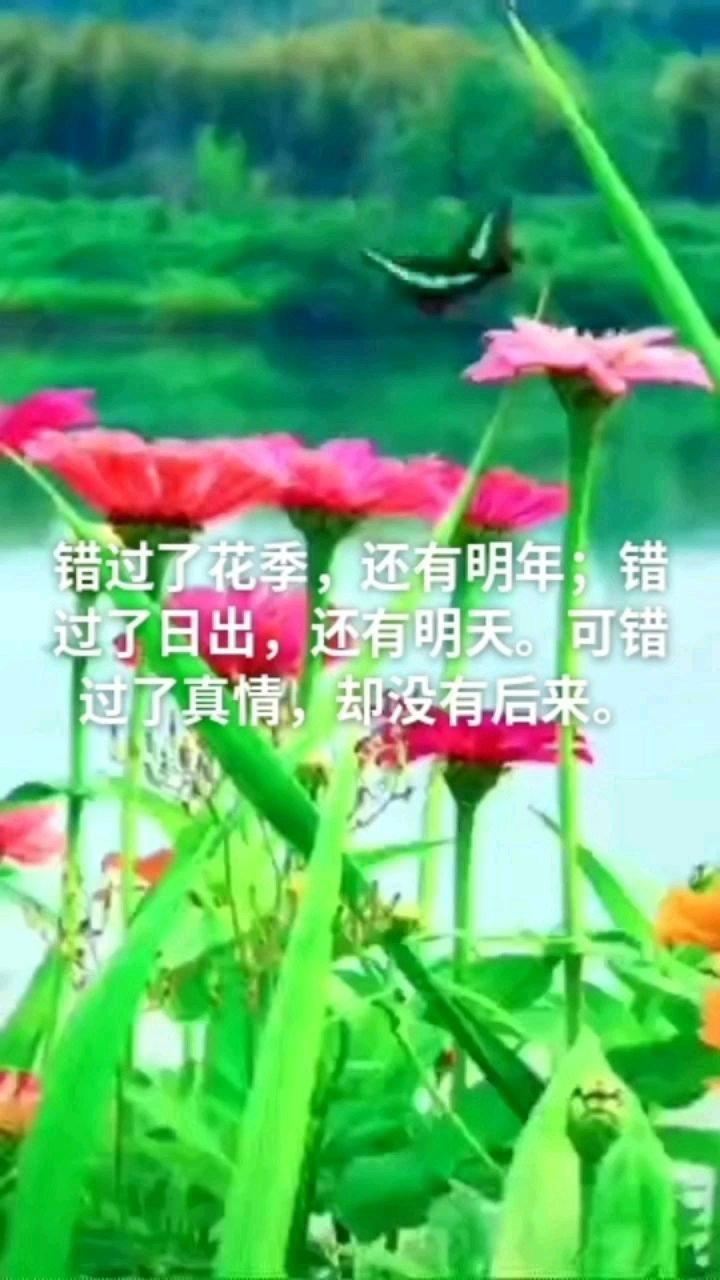 错过了花季,还有明年;错过了日出,还有明天。可错过了真情,却没有后来。