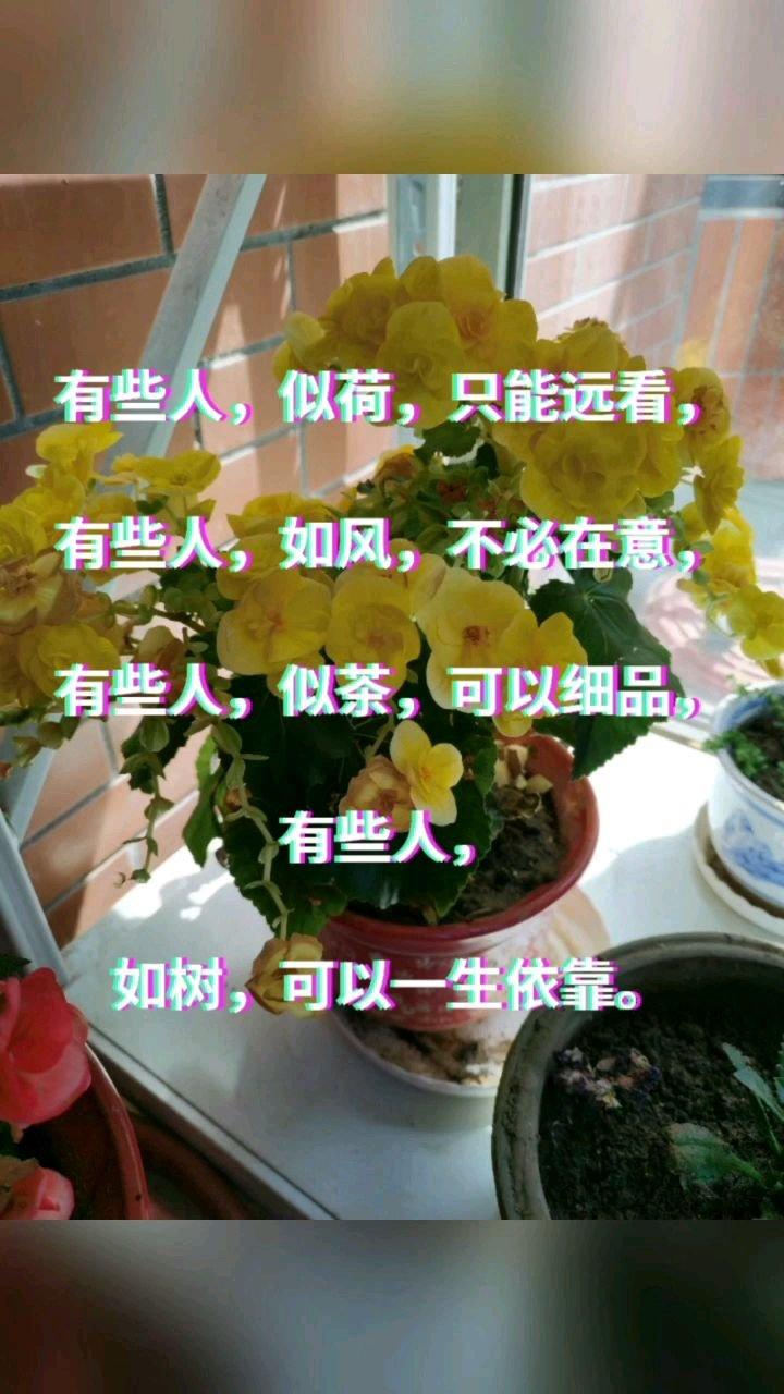 有些人,似荷,只能远看,  有些人,如风,不必在意,  有些人,似茶,可以细品,  有些人,  如树,可以一生依靠。