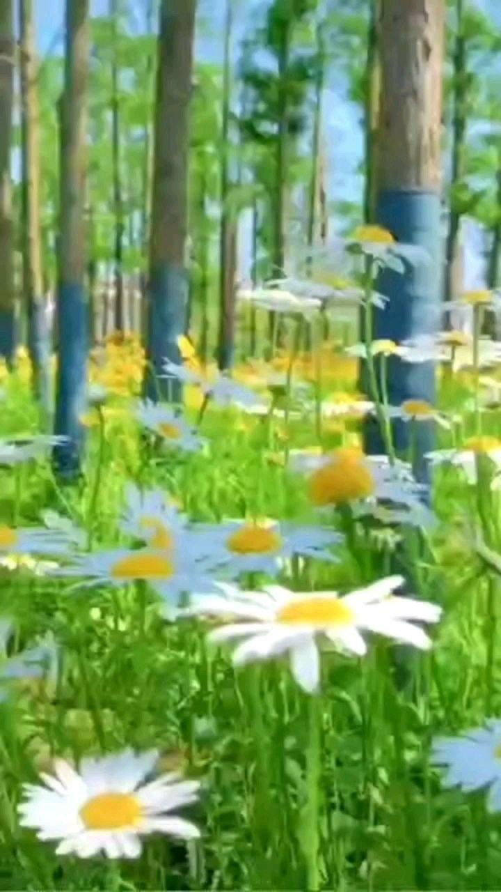 生活的原野无边无际,而我们每一个人只不过是其中的一棵草。是一棵草就让我们拥有一颗草的快乐,满足一棵草的幸福吧!