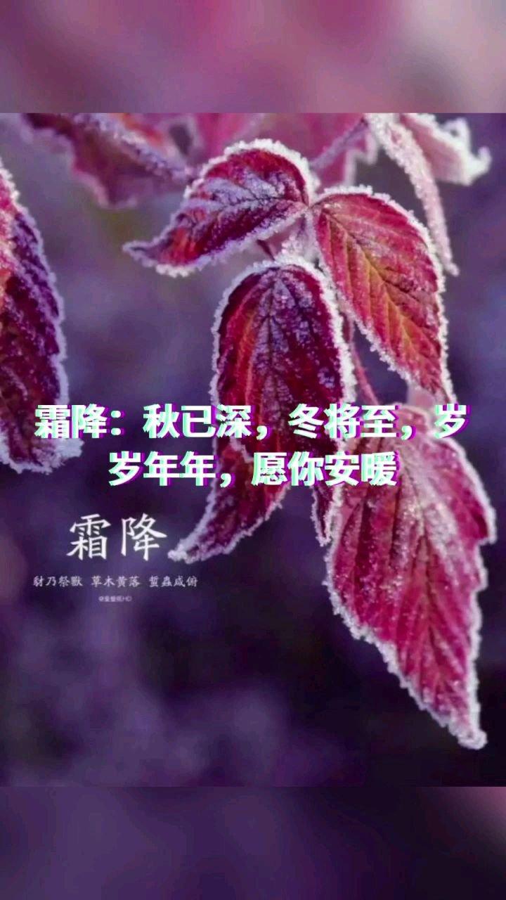 霜降:秋已深,冬将至,岁岁【嘀~】,愿你安暖