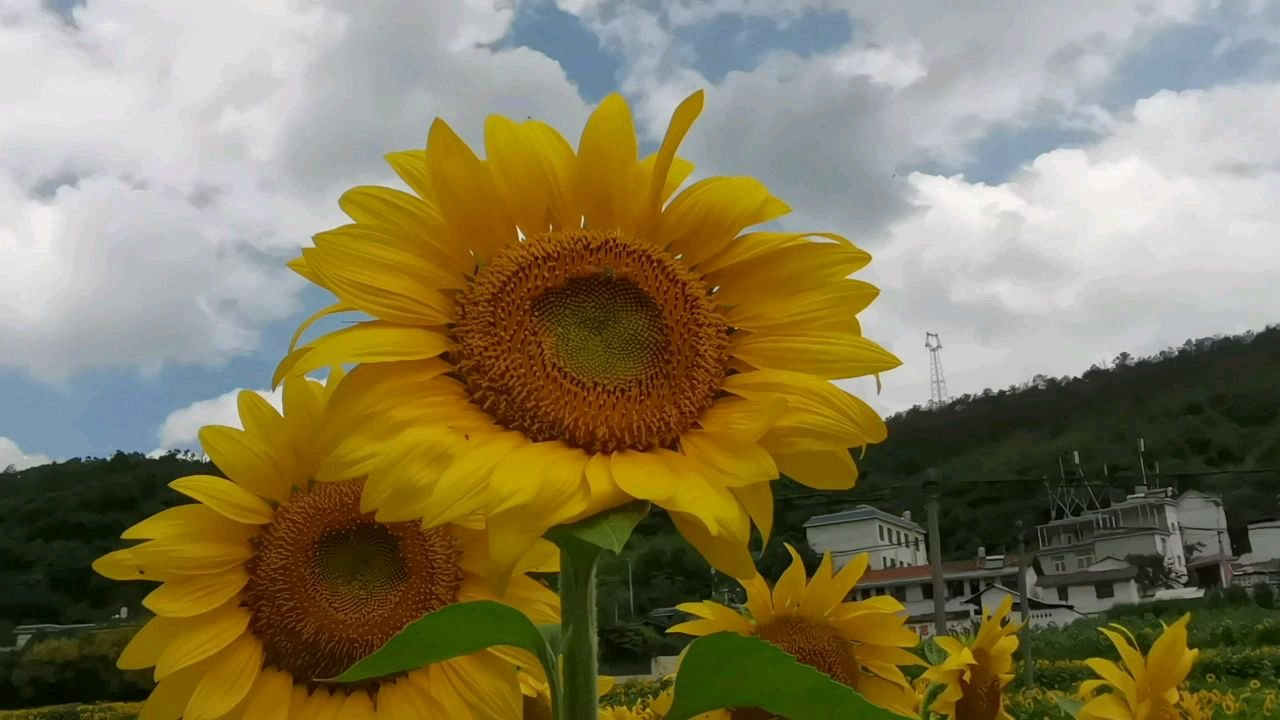 #带上花椒去旅行 向阳而生,逐光而行,心有暖阳,何惧人生沧桑!