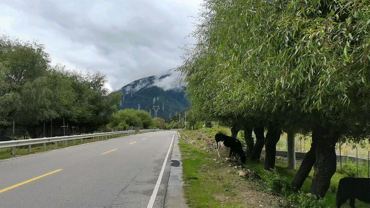 骑行中国 六进西藏之林芝 原生态文明#九月你好 #带上花椒去旅行 #百年奋进京彩启航