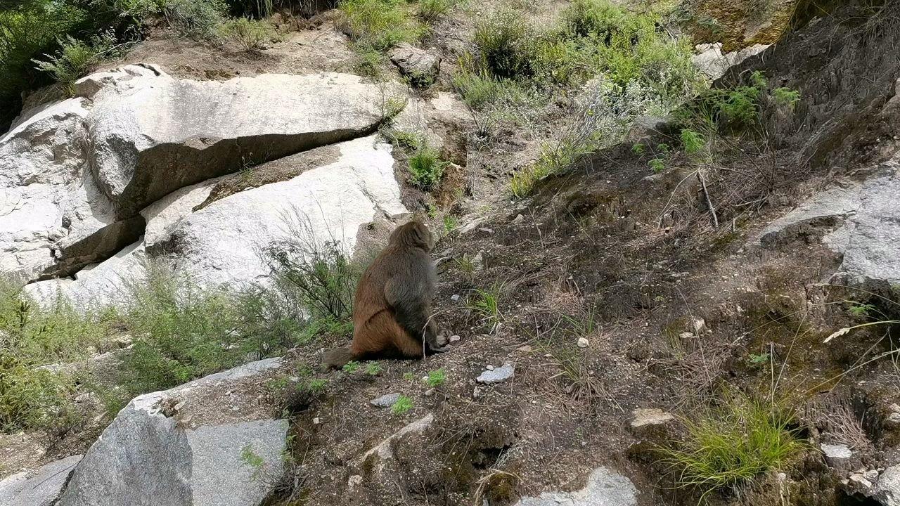 骑行中国 六进西藏之山南 好丑的一只猴#九月你好 #带上花椒去旅行
