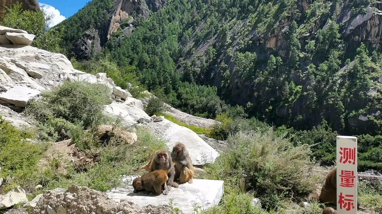 骑行中国 六进西藏之山南 好棒的小猴子#又嗨又野在玩乐 #带上花椒去旅行