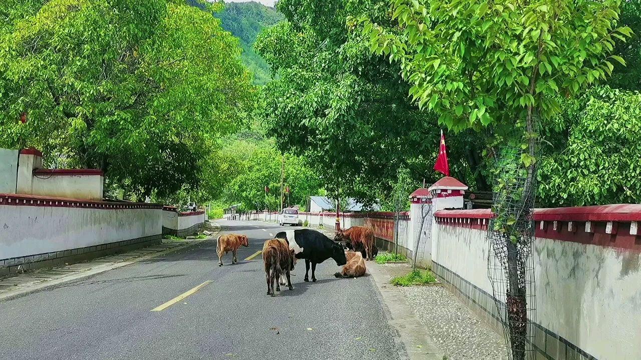 西藏记忆#九月你好 #带上花椒去旅行
